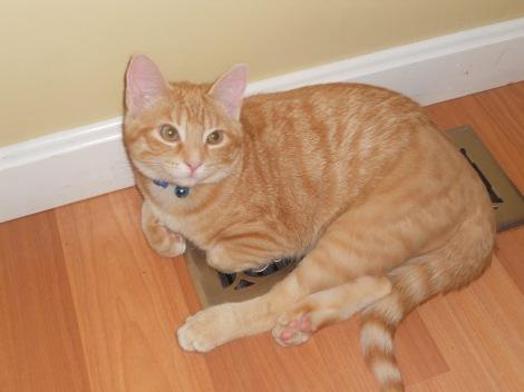 Cat Zach Diamond