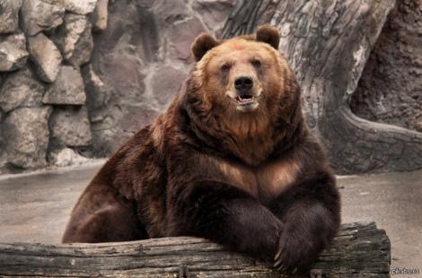 Putin Bear Zach Diamond