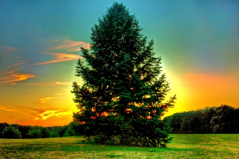 sun-behind-pine-tree
